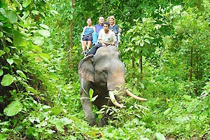 Elephant Riding and Waterfalls